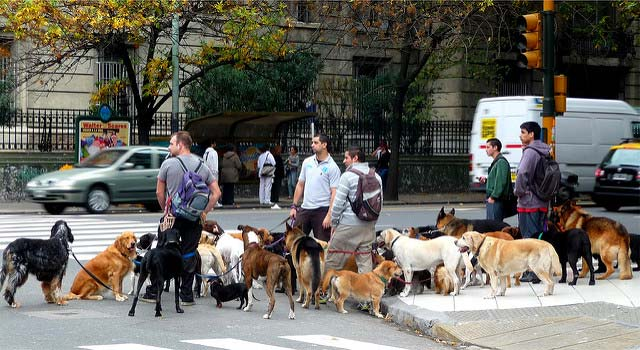 Dog Walkers in Buenos Aires