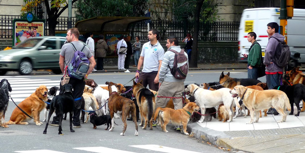 Paseadores de Perros