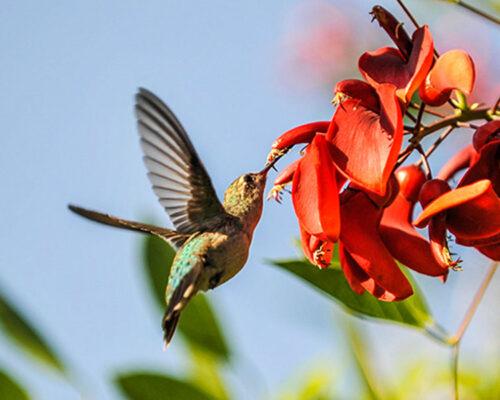 Avistaje de Aves Buenos Aires