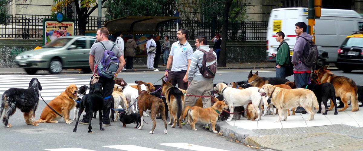 dog-walkers